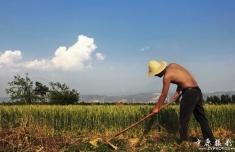 评张晋恩万博客户端下载官网作品《我为农民代言》